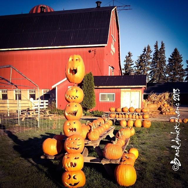 Oct 29 - pumpkin {stack of jack-o-lantern at Hagerman Farms} #photoaday #pumpkin #jackolantern #hagermanfarms #princeedwardcounty #autumn #fall #barn #morning