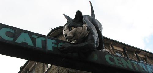 200711b_CatfordCat