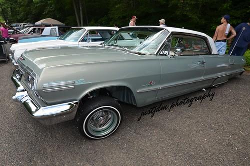 smooth impala (4)