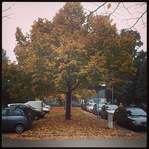 Giallo d'autunno #igersfc #fall #autumn #autunno #giriingiro #viaggioinromagna #igersfc