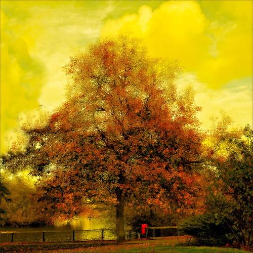 """""""She was an Auburn tree in lemon skies."""""""