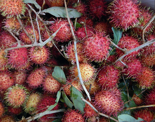 <strong>Rambutan</strong>: a type of Asian fruit similar to lychee.