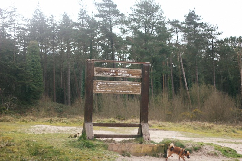 the raven nature reserve