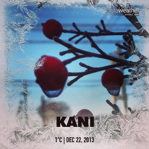#weather #instaweather #instaweatherpro  #sky #outdoors #nature #world #love #followme #follow #beautiful #instagood #fun #cool #like #life #nice #happy #colorful #photooftheday #amazing #kani #japan #day #winter #morning #cold #jp  さ、さっ、寒いっ。  玄関先の南天の赤い実に