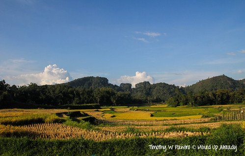 Indonesia - West Sumatra - Batusangkar - Tanah Datar - View of Bukit Barisan and paddyfield