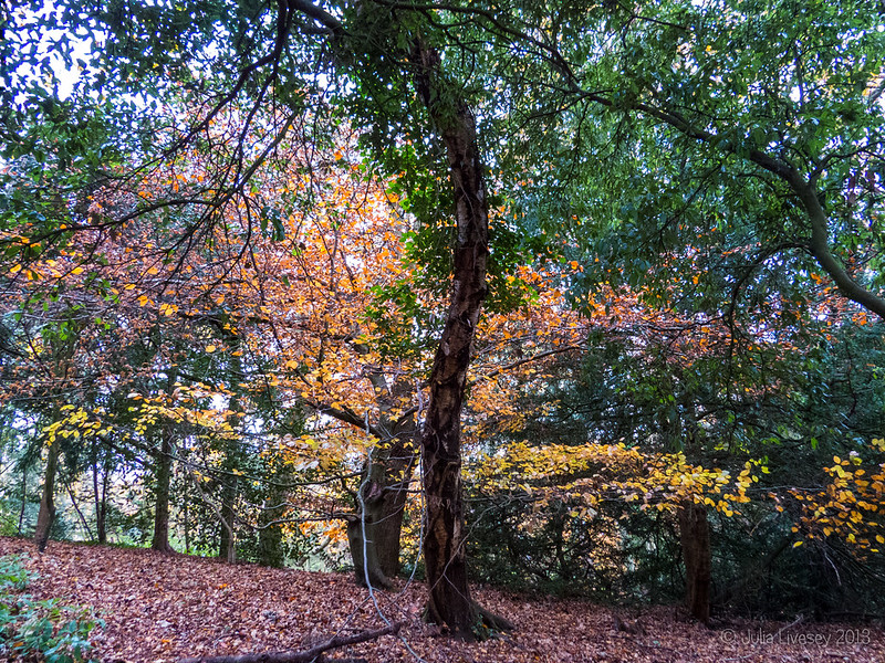 Trees in the Woodland Walk