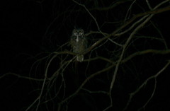 A blurry owl in a blurry tree