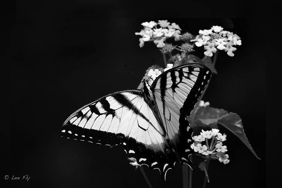 Butterflies are self propelled flowers