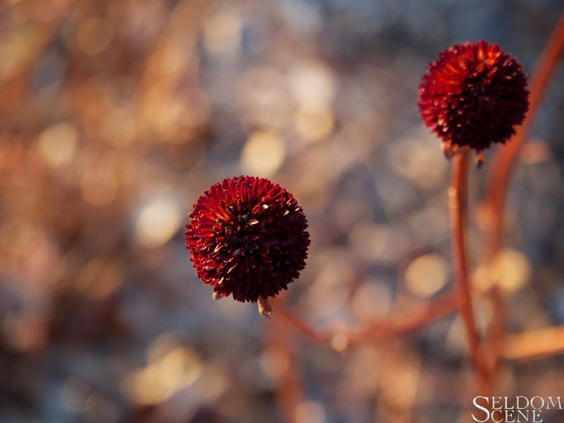Shades of last Autumn