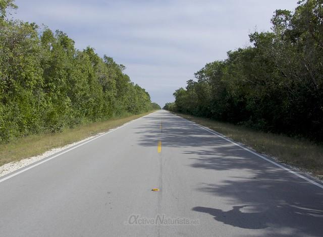 view 0008 Everglades, Florida, USA