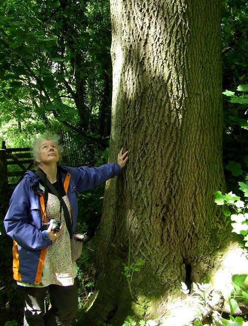 common ash tree