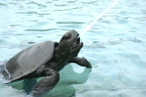 The turtle spits at Neptune