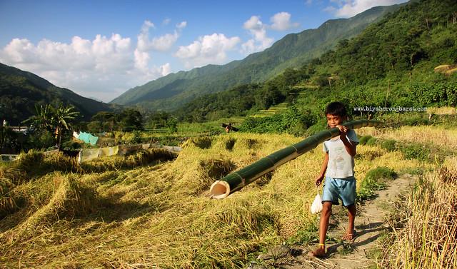 Kid carrying a bamboo old tinglayan rice terraces kalinga luplupa
