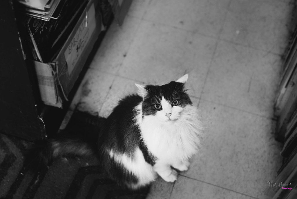 The Cat from A Record Store