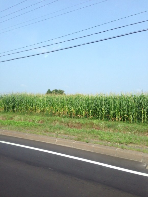 北海道な風景