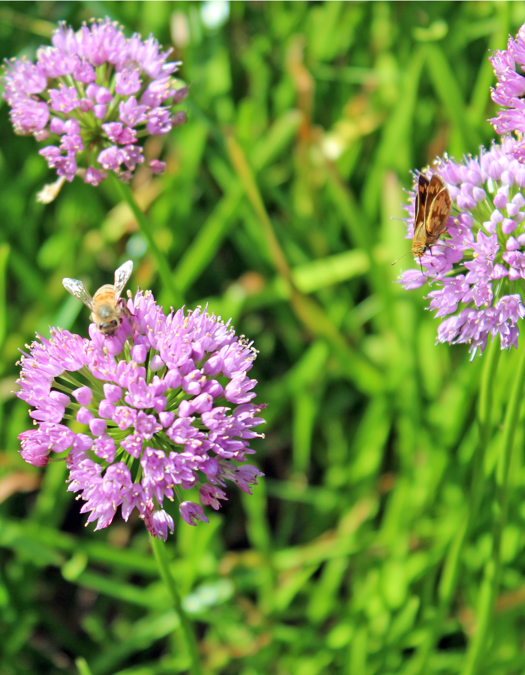 bumblebee-and-butterfly-purple