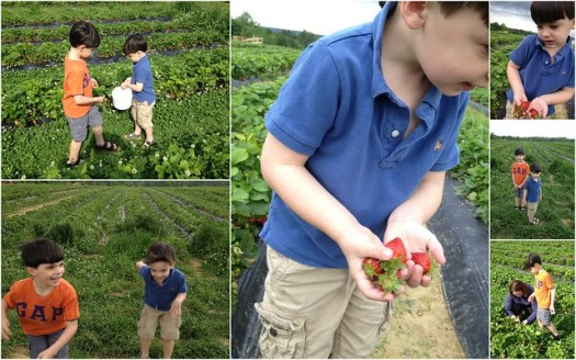 Strawberry Picking at Jerry Marsh Farm, Cleveland AL