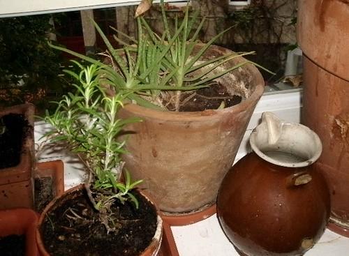 Rosmarin und Aloe