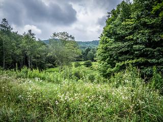 Cranberry Glades, West Virginia