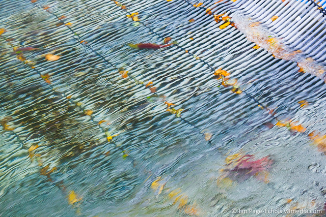 Rippling Water and Salmon Fence