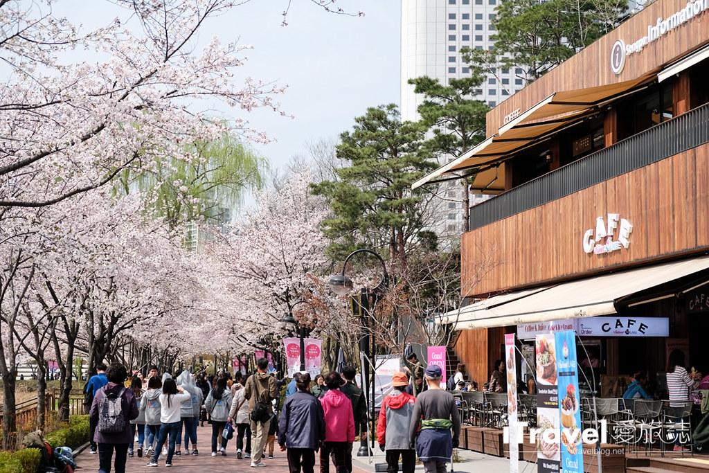 首尔赏樱景点 乐天塔石村湖 (26)