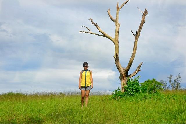 Sky and a Tree