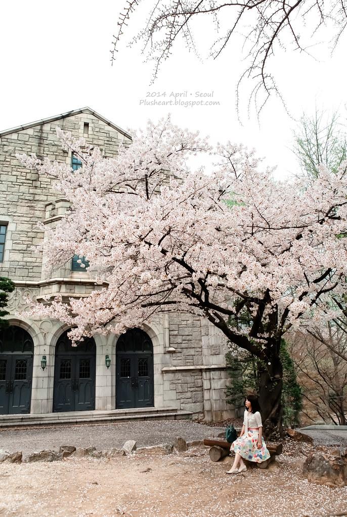 ▌首爾 ▌首爾如此美麗.在梨大巧遇櫻花