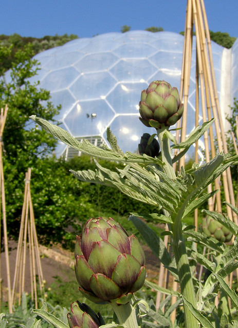 Biome and artichokes at the Eden Project