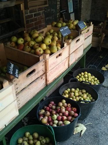 calke abbey apples