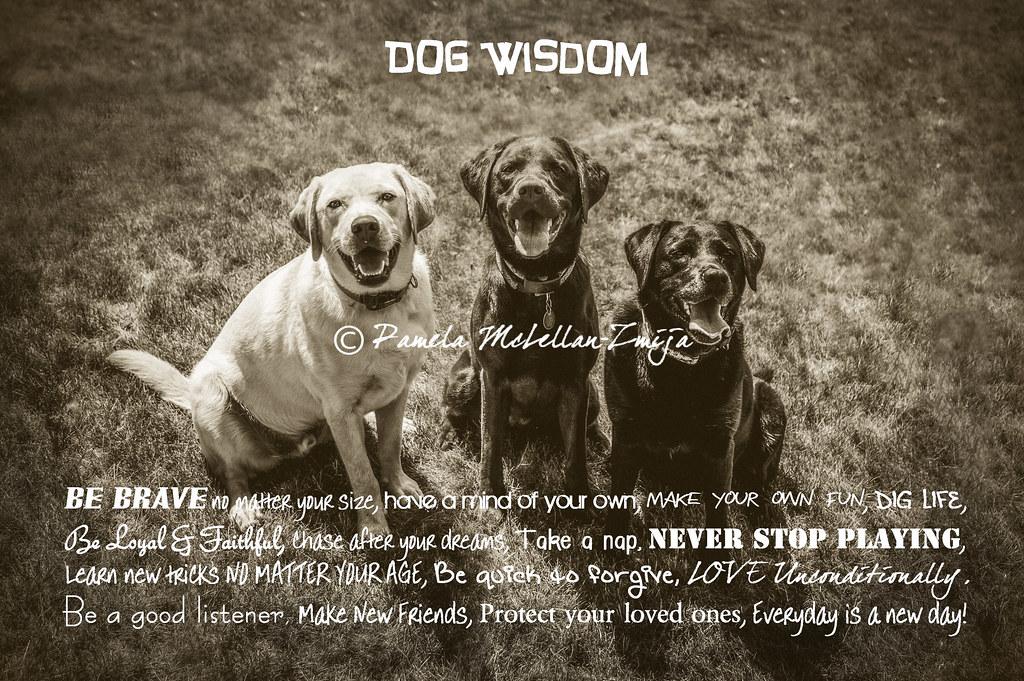 20120708-Dog Wisdom-WM