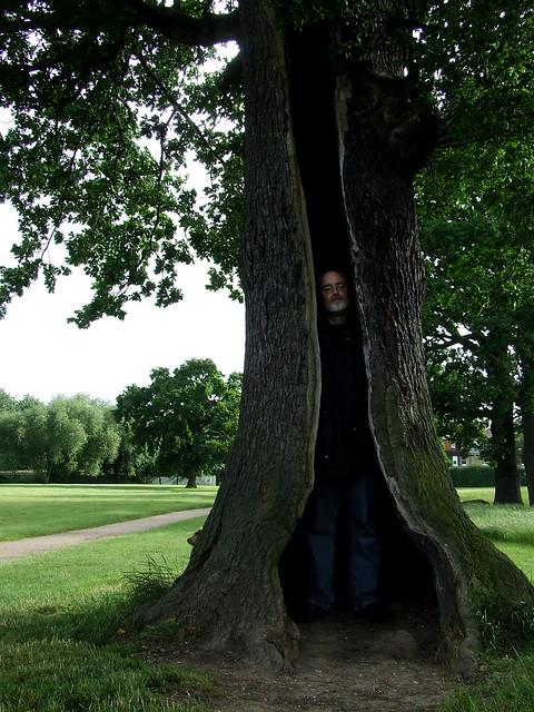 lightning-struck oak 1