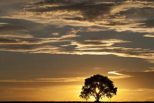 One Little Tree