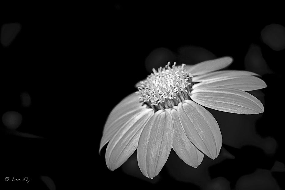 one lone flower