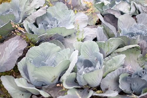 East Coast Organics-2