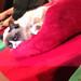 Grumpy Cat - IMG_8078