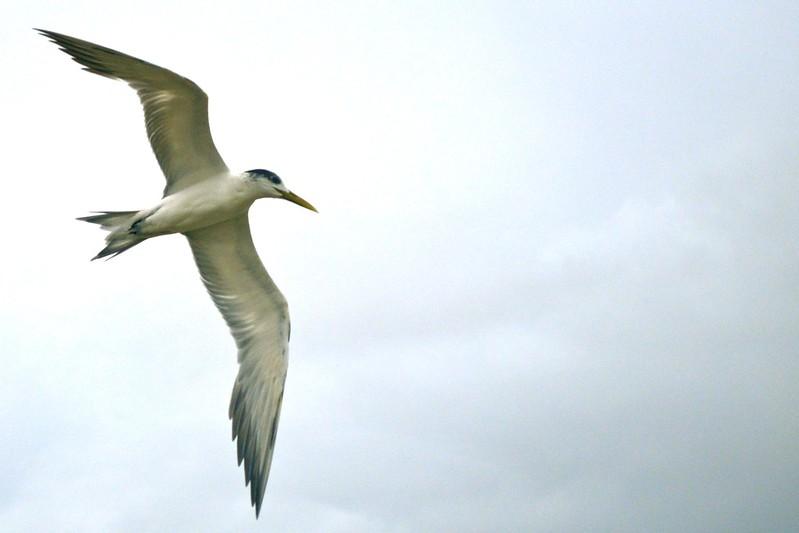 shooting terns