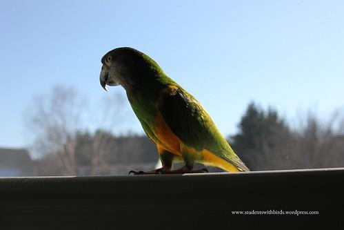 Birds' Arrival 205