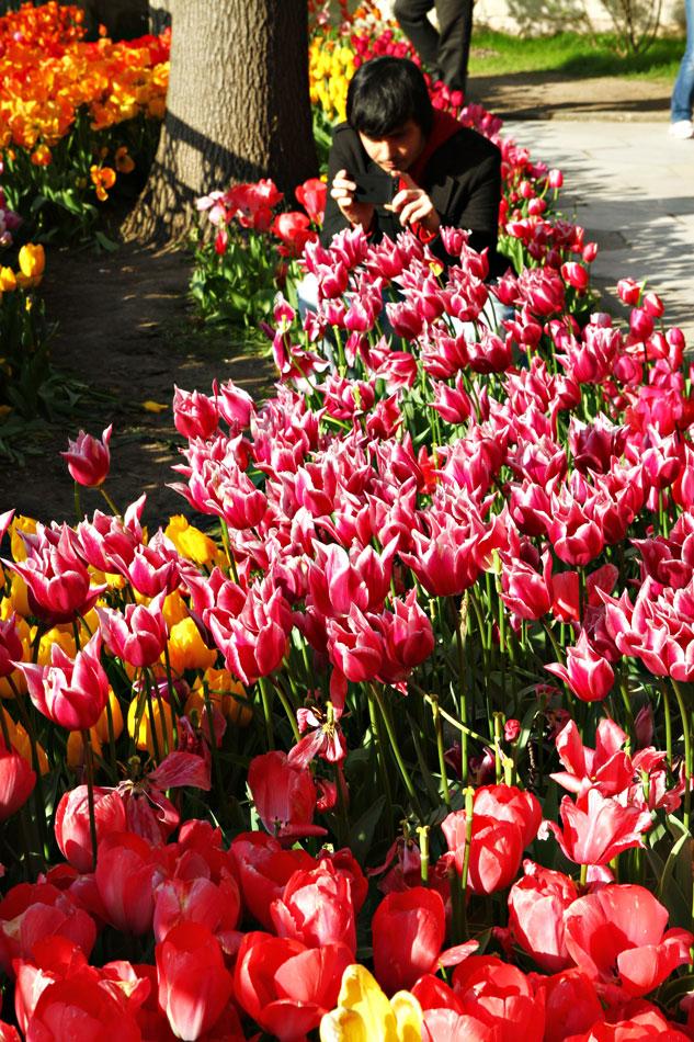 Istanbul Tulip Festival - Topkapi Palace