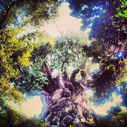 Tree of Life Disneyworld by @MySoDotCom