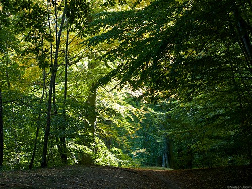 Furesø forest