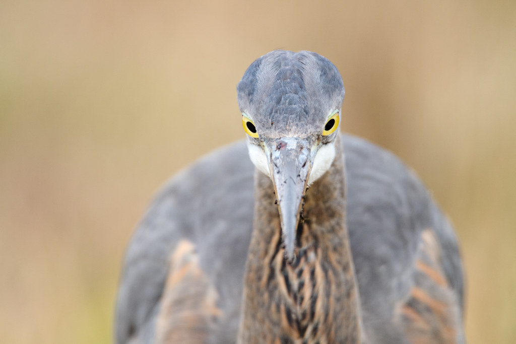 A muddy beak