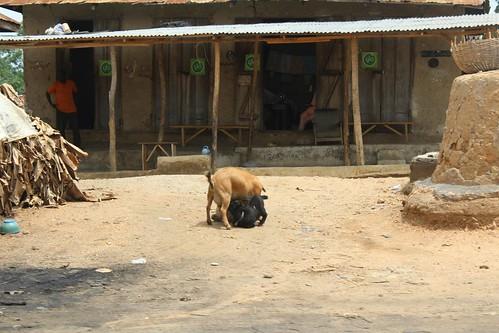 Owena Ijesa - Osun State, Nigeria. by Jujufilms