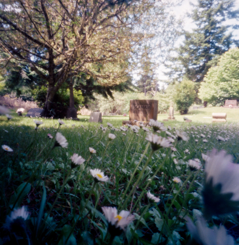wildflowers in the graveyard