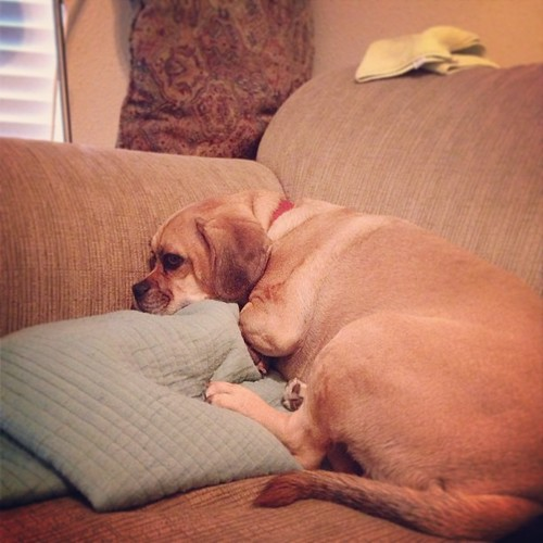 It's time to take poor little sick puggle to the v-e-t.