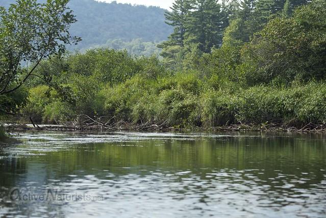 beaver dam 0001 Sacandaga River, Adirondack, NY, USA