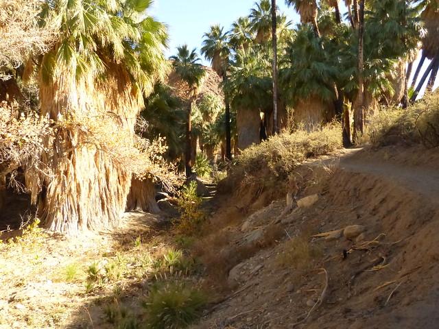 Palm Canyon Trail P1080054
