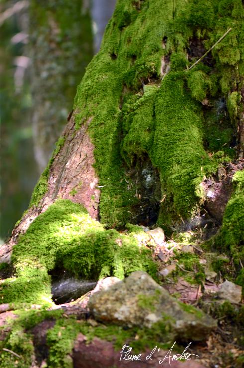 arbre et mousse
