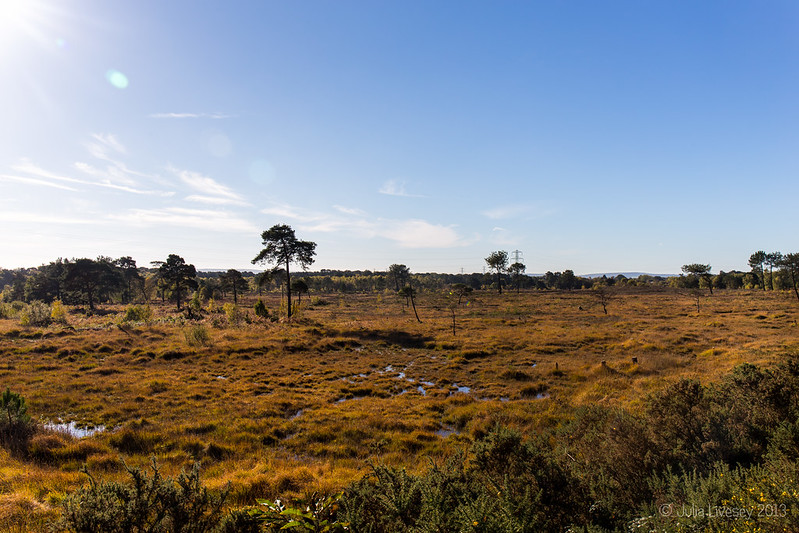 Upton Heath in the Autumn sunshine