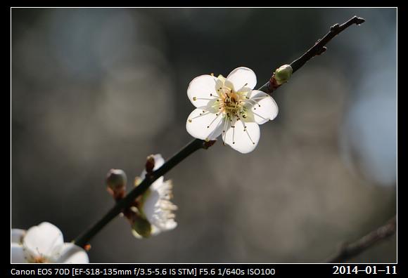 20140111_Flower7
