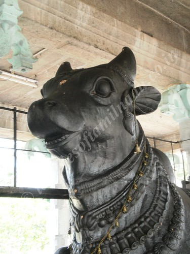 Nandi at Thirupungur Sivalokanathar Temple